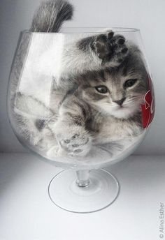 Grand reserve of The House. Cat vintage 2017 I Love Cats SLVH and like OMG! get some yourself some pawtastic adorable cat apparel! Cute Cats And Kittens, I Love Cats, Crazy Cats, Kittens Cutest, Cute Baby Animals, Animals And Pets, Funny Animals, Beautiful Cats, Animals Beautiful