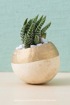 Use a gold paint pen to decorate a planter for your succulents