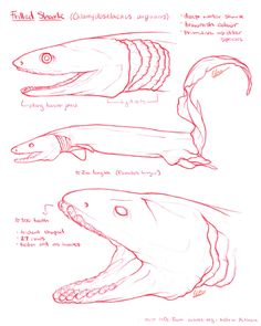 E Moss - Illustrator Shark Information, Frilled Shark, Ocean Monsters, Shark Drawing, Elizabeth Moss, Shark Art, Marine Biology, Ocean Art, No Frills