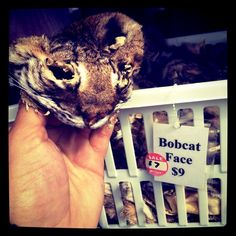 A bobcat face - reduced from $9 to $7 - what a deal