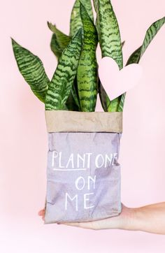 Plant One On Me: How to Make Budget-Friendly DIY Valentines