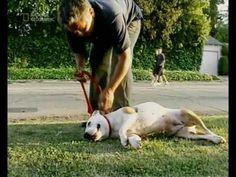 A csodálatos kutyadoki