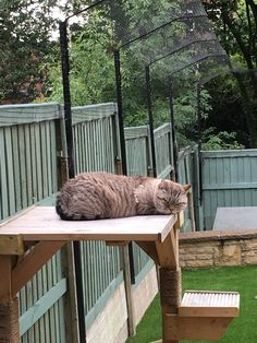 Pet Fencing Solutions: Cat Fence, Cat Enclosure, Catio, Cat Run Diy Cat Tower, Cat Fence, Outdoor Cat Enclosure, Cat House Diy, Dog Garden, Cat Run, Cat Hacks, Indoor Pets, Outdoor Cats