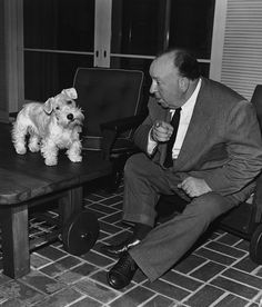 Alfred Hitchcock and his Sealyham Terrier. I love that Alfred Hitchcock put his Sealyham Terriers in his movies. Dog Day Afternoon, Fox Terriers, Famous Dogs, Famous People, Famous Faces, Alfred Hitchock, Sealyham Terrier, Mini Schnauzer, Miniature Schnauzer
