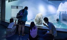 We have got to get him out of there!! Polar Bear Trapped In Mall Aquarium Is Going Into 'Mental Decline'