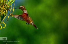 nature by strock. Please Like http://fb.me/go4photos and Follow @go4fotos Thank You. :-)