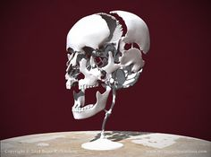 "Beauchene ""Exploded"" Skull 3D Print"