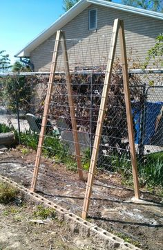 DIY cucumber trellis - 2x3s, concrete reinforcement mesh and a couple strap hinges. Staple the mesh to the boards, connect them at the top with hinges and voila: a perfect cheapo cucumber trellis
