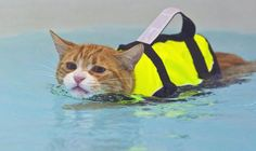 16 Cats Who Aren't Sure About This Swimming Thing
