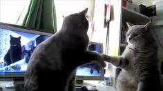 Cats Playing Patty-cake, what they were saying...Still makes me laugh, after all this time. :-)