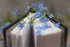 """""""With freedom, books, flowers,and the moon, who could not be happy? Flower Aesthetic, Book Aesthetic, Aesthetic Photo, Aesthetic Pictures, Book Photography, Creative Photography, Book Flowers, Foto Art, I Love Books"""