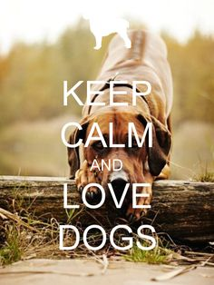 KEEP CALM AND LOVE DOGS #Calmcoat