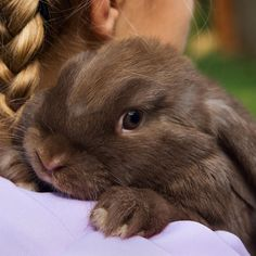 thought I would like a pet bunny until I found out how they get into everything....