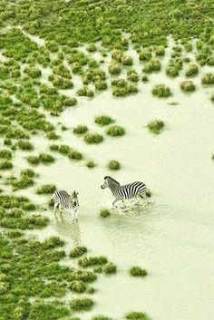 Wildlife of the Makgadikgadi Pan and the Okavango Delta in Botswana /  Zack Seckler