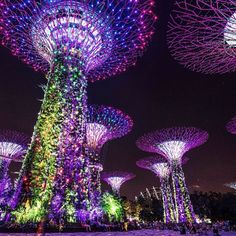 Gardens by the Bay's 'Supertrees' stand up to 50m tall and are home to a mix of ferns, vines and orchids. But the Supertrees are truly alive at night, when they are illuminated with a light and music show. @capturetheworld.com.au #gardensbytheway #supertrees #singapore #exploresingapore #travelsnap