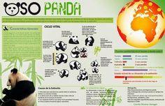 Oso Panda #Infografía #Ambiental #Animales
