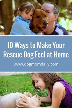 How to help your adopted dog quickly acclimate to their new home.