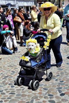 Daffodil Parade | Phillip Greenspun photo