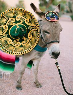 cocktail hour wedding donkey