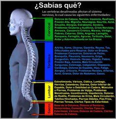 Partes de la columna vertebral yahoo dating