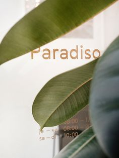 Paradiso - My favorite place to drink a good coffee Cafe Interiors, Best Coffee, Pure White, Geneva, Mid-century Modern, Plant Leaves, Palette, Mid Century, Pure Products