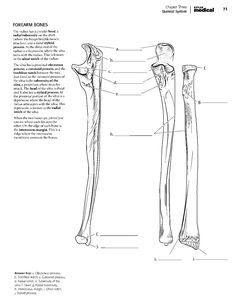 kaplan anatomy coloring bookpdf
