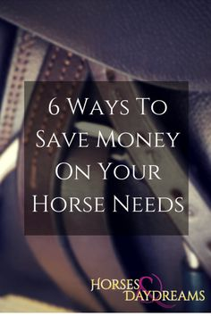 6 Ways To Save Money On Your Horse Needs | Horses & Daydreams