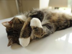 Please don't disturb Maru.