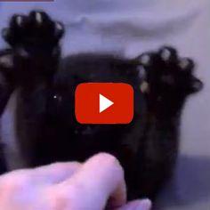 Stick 'Em Up! - A real cute video