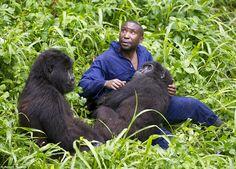 Gorillas and their caretakers. - Album on Imgur