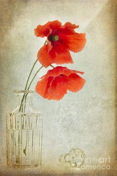 Two Poppies In A Glass Vase Digital Art by Ann Garrett - Two ...