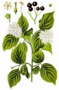 Herbal Herbs and Native American Healing & Cleansing