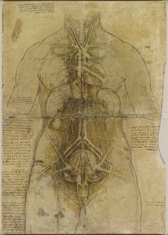 Da Vinci. An anatomical study of the principal organs and the arterial system of a female torso, pricked for transfer.