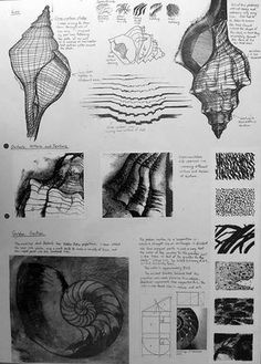 International GCSE Art Sketchbook examples Fill a page with observational drawings<br> Examples of sketchbook pages to inspire students who are working on a natural forms theme in their GCSE Art sketchbooks. Sketchbook Layout, Gcse Art Sketchbook, Sketchbook Inspiration, Sketchbooks, Architecture Sketchbook, Sketchbook Ideas, Sketching, Mise En Page Lookbook, Natural Form Art