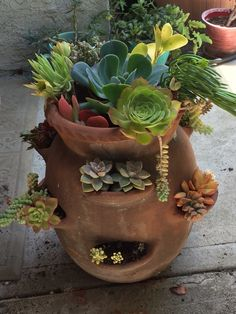 Front of repurposed strawberry pot! I used cutting from my other planters