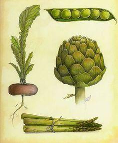 Alcachofa, espárragos ,rábano y guisantes