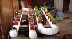 Build an cool Aquaponic system in your house or apartment that will produce organic plants! It's cheap & super easy! The system requires…