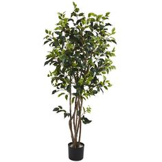 Nearly Natural 5333 Ficus Bushy Silk Tree, 5-Feet, Green * More info could be found at the image url.