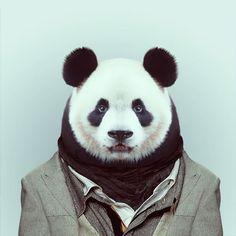 Panda style. Zoo Animals : des animaux habillés pour les photographes