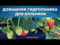 ДОМАШНЯЯ ГИДРОПОНИКА ВЫРАЩИВАНИЕ КЛУБНИКИ - ОБЗОР - YouTube