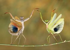The best pictures from National Geographic's Photo Contest 2014 - by Hasan Baglar at Nicosia, Cyprus of two mantis'