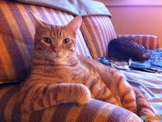 Cats Who Think They're Human | ORANGE YOU GLAD? | After a hard day, Madi D's cat Sheldon knows it's important to fit in some rest and relaxation.