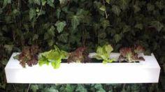 Comment créer un potager en pots sur sa terrasse?