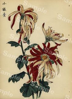 Lovely KORIN ukiyo-e Japanese woodblock original by Antique Prints, Chrysanthemum, Rarity, Period, Japanese, The Originals, Antiques, Artist, Etsy
