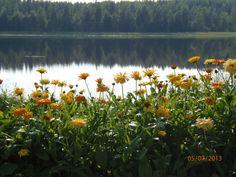Ihana maisema ja kukat!
