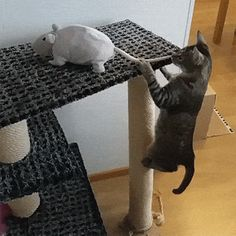 Big Mouse Down | Funny Cat GIFs