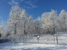 Snow on the fence!