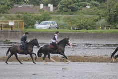 All That Jazz's first time at the beach.  #loveirishhorses #horseforsale Call James +353 (0) 83 3168366 or email coopershillequine@gmail.com