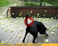 Prezent urodzinowy Śmieszne Filmy Psy http://Zoomia.pl