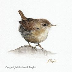 Wren: An original watercolour painting by Jan Taylor. by KeepersCottageArt on Etsy